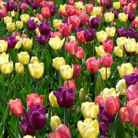 spring-flowers-wallpapers-41
